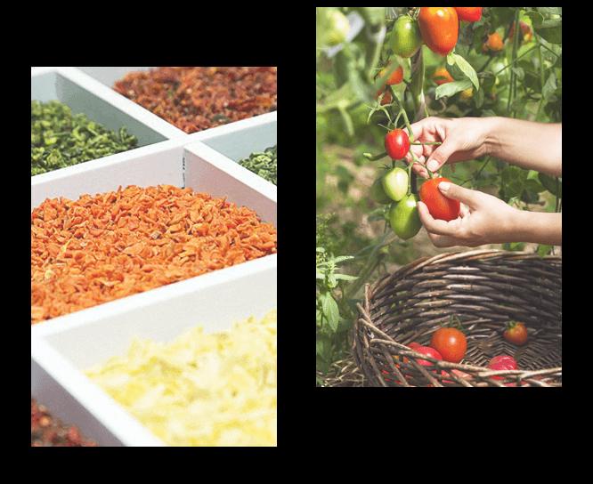 сушені овочі та фрукті